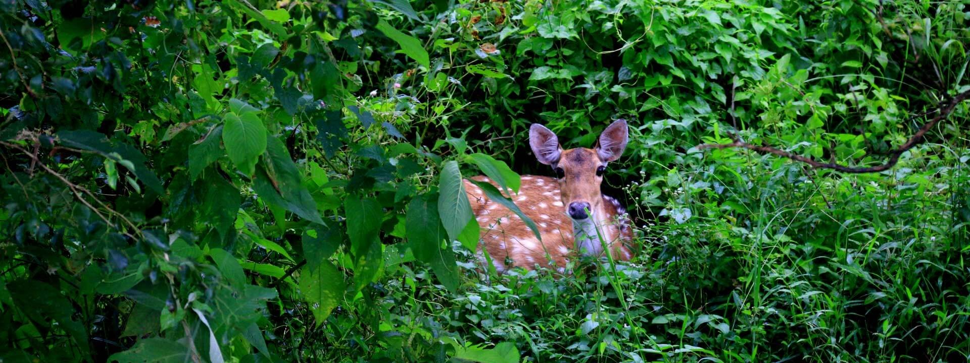 Photography in chitwan national park